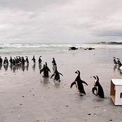 penguins_0014.jpg