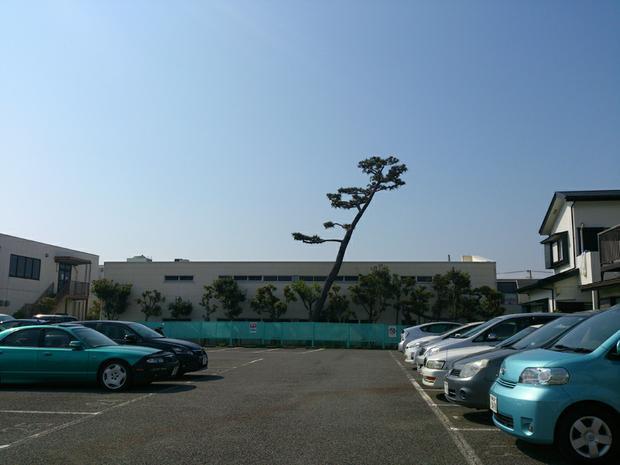 Tree in carpark