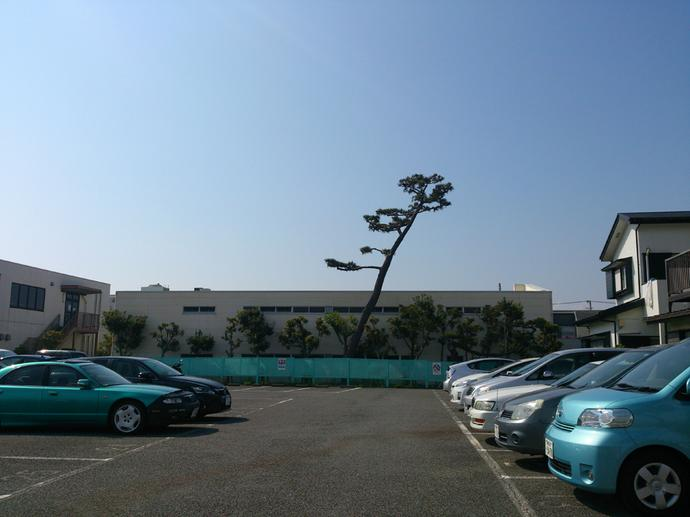 Tree in carpark
