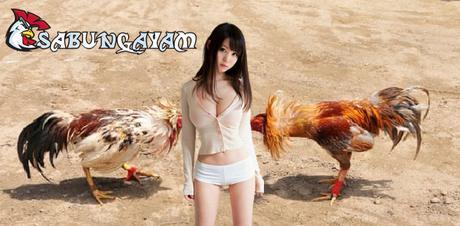 Manfaat Yang Bisa Didapatkan Dari Daun Sirih Untum Ayam Sabung 2