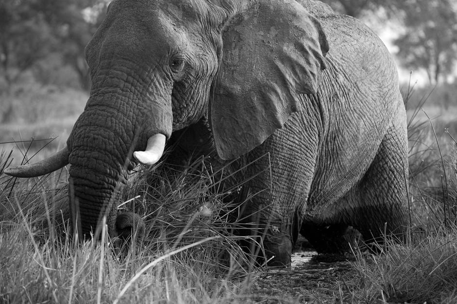 Kwai River Elephant