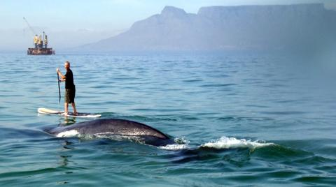 whalesup.jpg