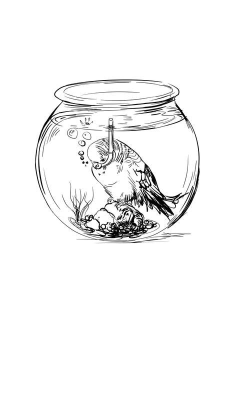 bird-bowl.jpg