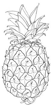 Pineapple line illustration