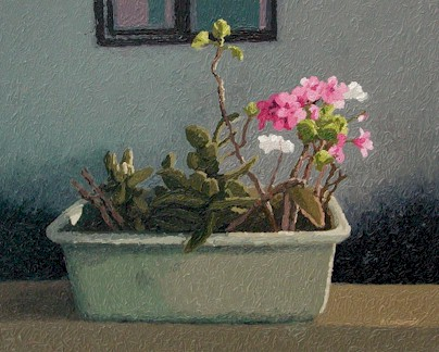Geranium and succulents, Churchaven - SOLD