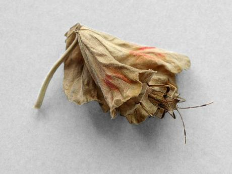 thumbnail for Leaf with bug, 2010