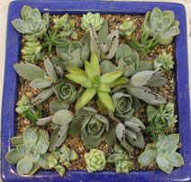 Thumbnail for Succulent Creations