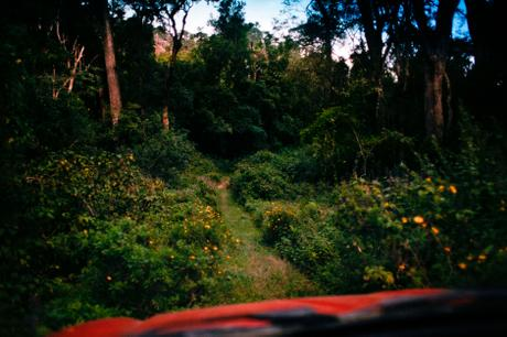 thumbnail for The road into the forest. Hogsback
