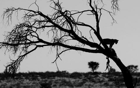 leopard_0632.jpg
