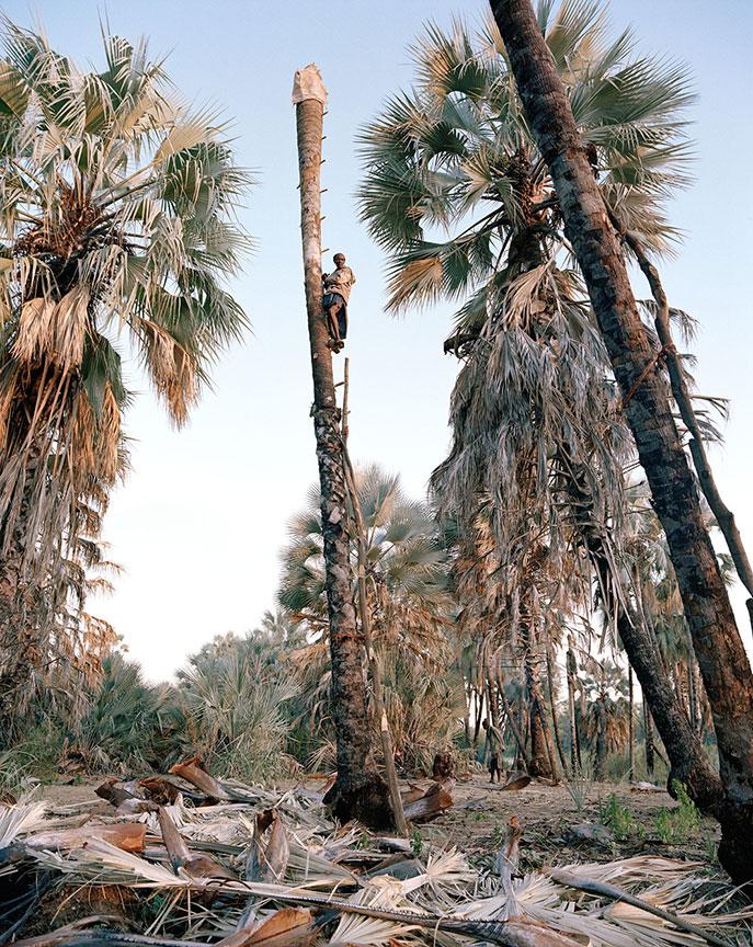 Portrait 5, Palm Wine Collectors, Kunene Region, Namibia, 2015