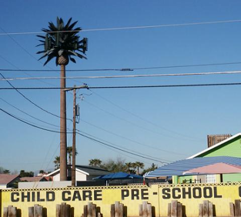 palm cell tower at a daycare