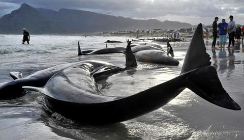 ct_whales_91.jpg
