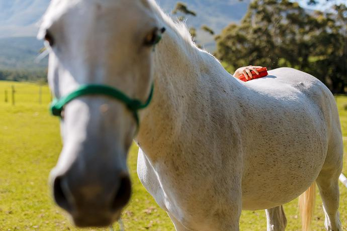 Tourism, Marketing and Social Media Content Photography – Swellendam