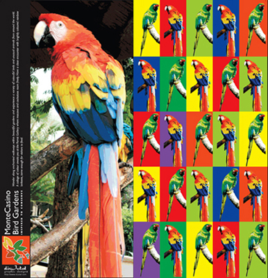 Monte Casino Bird Park parrot greeting card