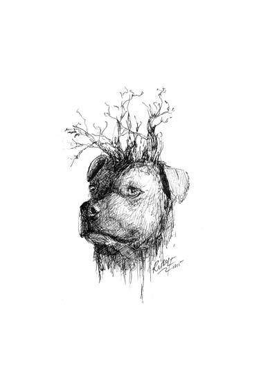 Jock of the Bushveld - Actor / Staffordshire Bull Terrier Cross