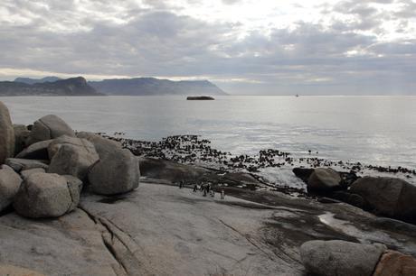False Bay from Boulders Beach [48033]