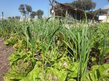 The permaculture garden at the Rocklands Outdoor Abundance Centre in Mitchell's Plain, Cape Town