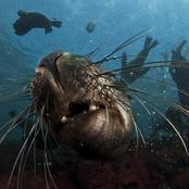 Hello Seal Buddy